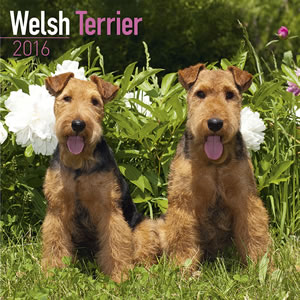 2014 Welsh Terrier Calendar