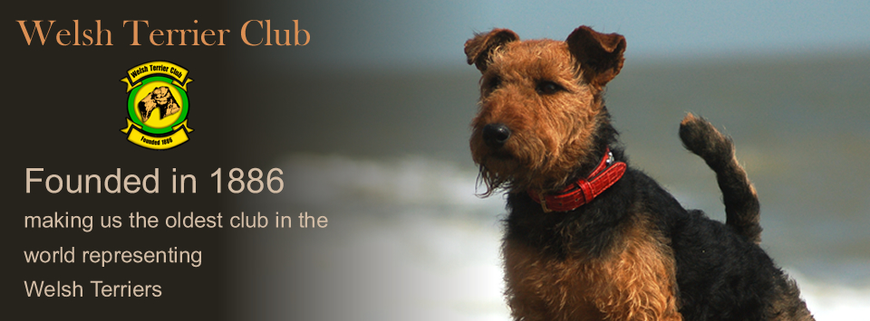 Welsh Terrier Club