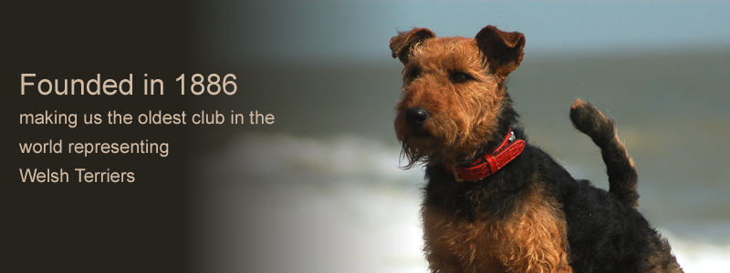 The Welsh Terrier Club